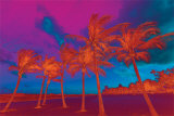 Abstract Palm Trees Posters