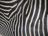 Close-Up of Grevy's Zebra Stripes, Equus Grevyi, Africa Fotoprint av John & Barbara Gerlach