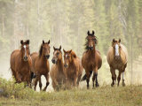Horses on Ranch in Montana During Roundup Stampa fotografica di Adam Jones