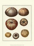 Crackled Antique Shells III Poster von Denis Diderot