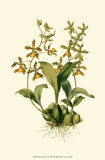 Orchid Array II Pôsters por  Drake