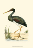 Water Birds I Posters