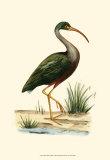 Water Birds II Affiches