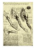 Studies of Human Arm Giclee-trykk av  Leonardo da Vinci