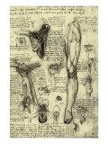 Human Anatomy Giclee-trykk av  Leonardo da Vinci