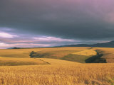 Overberg Landscape, Western Cape, South Africa, Africa Photographic Print by Alain Evrard