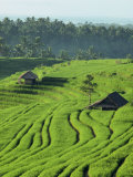 Landscape of Lush Green Rice Terraces on Bali, Indonesia, Southeast Asia Photographic Print by Alain Evrard