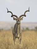 Male Greater Kudu, Kruger National Park, South Africa, Africa Photographic Print by James Hager