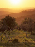 Sunset over Vineyards Near Panzano in Chianti, Chianti, Tuscany, Italy, Europe Photographic Print by Patrick Dieudonne