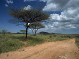 Dirt Track Road and Acacia Trees, Baragoi, Kenya, East Africa, Africa Photographic Print by Dominic Harcourt-webster
