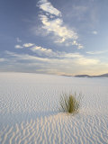 Yucca Growing in Rippled Sand, White Sands National Monument, New Mexico, USA Photographic Print by James Hager