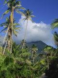 Landscape, Nevis, Leeward Islands, West Indies, Caribbean, Central America Fotografisk trykk av Miller John