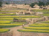 Village Near Rawalpindi, Pakistan Fotografisk trykk av Harding Robert