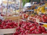 Tomatoes on Street Market Stall, Palermo, Sicily, Italy, Europe Trykk på strukket lerret av Miller John