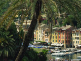Harbour from Hillside, Palm-Tree in Foreground, Portofino, Portofino Peninsula, Liguria, Italy Photographic Print by Tomlinson Ruth