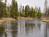 Fly Fishing, Firehole River, Yellowstone National Park, UNESCO World Heritage Site, Wyoming, USA Photographic Print by Pitamitz Sergio