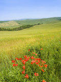 Crete Senesi Area, Near Asciano, Siena Province, Tuscany, Italy, Europe Photographic Print by Tondini Nico