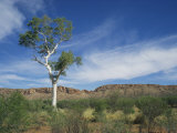 Landscape in the West Macdonnell Ranges Near Alice Springs in the Northern Territory, Australia Photographic Print by Wilson Ken