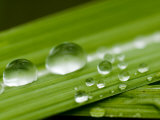 Water Droplets on Grass, Dali, Yunnan, China Photographic Print by Porteous Rod