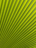 Palm Leaf, Botanical Gardens, Georgetown, Penang, Malaysia, Southeast Asia Photographic Print by Porteous Rod