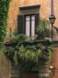 Window Display Near Piazza Navona, Rome, Lazio, Italy, Europe Photographic Print