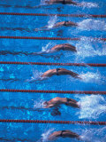 Start of a Men's Backstroke Swimming Race Lámina fotográfica por Steven Sutton