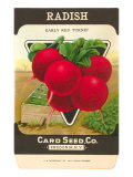 Radish Seed Packet Posters
