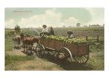 Watermelon in Cart, Lodi, California Kunstdrucke
