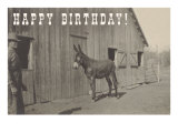 Happy Birthday, Mule and Man Poster