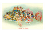 Hawaiian Fish, Oapukai Plakater