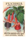Fuchsia Seed Packet Kunstdruck