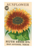Sunflower Seed Packet Art