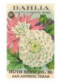 Dahlia Seed Packet Premium Giclee Print