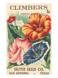 Mixed Climbers Seed Packet Poster