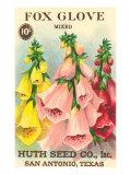 Fox Glove Seed Packet Prints