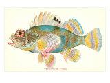 Hawaiian Fish, Pilikoa Kunstdruck