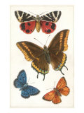 Schmetterlinge Giclée-Premiumdruck