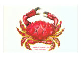Hawaiian Crab Giclée-Premiumdruck