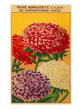 French Reine Marguerite Chrysanthemum Seed Packet Premium Giclee Print