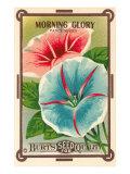 Morning Glory Seed Packet Premium Giclee Print