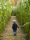 A young boy wanders a corn maze at the Moulton Farm, Meredith, New Hampshire, USA Impressão fotográfica por Jerry & Marcy Monkman