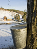 Sap buckets on Maple Trees, Pomfret, Vermont, USA Impressão fotográfica por Jerry & Marcy Monkman