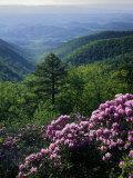 Blue Ridge Mountains Catawba Rhododendron, Blue Ridge Parkway, Virginia, USA Fotografie-Druck von Charles Gurche