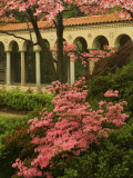 Franciscan Monastery with Pink Dogwood and Azaleas, Washington DC, USA Photographic Print by Corey Hilz