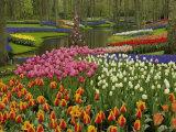 Tulip and Hyacinth Garden, Keukenhof Gardens, Lisse, Netherlands, Holland Fotografisk trykk av Adam Jones