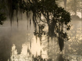 Tree Branch and Spanish Moss, Magnolia Plantation, Charleston, South Carolina, USA Photographic Print by Corey Hilz