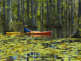 Man Kayaking, Cypress Gardens, Moncks Corner, South Carolina, USA Photographic Print by Corey Hilz