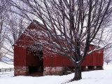 Barn and Maple after winter storm, Fairfax County, Virginia, USA Valokuvavedos tekijänä Charles Gurche