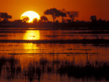 Setting Sun over Lush Banks, Chobe National Park, Botswana Lámina fotográfica por Paul Souders