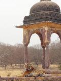 Royal Bengal Tiger At The Cenotaph, Ranthambhor National Park, India Photographic Print by Jagdeep Rajput